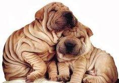 Afbeeldingsresultaat voor honden