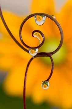 incredible. look closely.  that's a flower in the droplet.