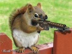 Deadly Animals, Scary Animals, Cute Funny Animals, Funny Cute, Hilarious, Funny Squirrel Pictures, Dog Pictures, Animal Pictures, Funny Pictures