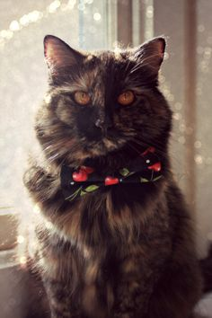 Bow Tie Collar - Cat, Small Dog - Girly - Pet Accessories - Black, Red, White - Rockabilly, Cherries, Polka Dots, Jingle Bell