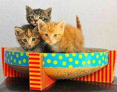 Little Fuzzy Kittens Rescued
