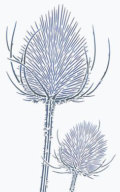 Wild Teasels Stencil Wild Thistle Teasel Stencils                                                                                                                                                                                 More