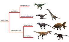 New dinosaur phylogeny (simple view) | M. G. Baron, D. B. Norman & P. M. Barrett (2017) A new hypothesis of dinosaur relationships and early dinosaur evolution, Nature 543, 501–506
