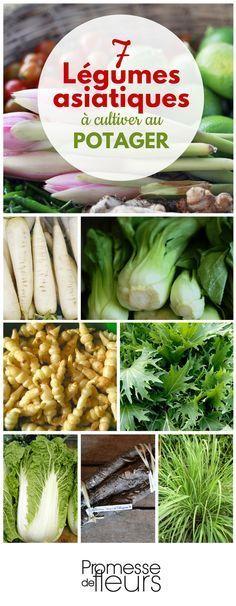 #potager #legumes #asiatiques