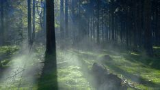 cinemagraph gif nature cinemagraph smoke forest perfect loop trees cinemagraphs dawn fog moss videography mist living stills