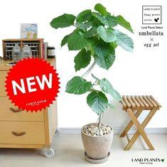 Ficus, Bonsai, Artificial Plants, Flooring, Interior, Green, Artworks, Japan, Room