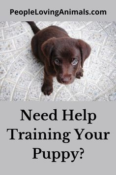 Get help training your puppy from Doggy Dan's Perfect Puppy Program! Puppy Training, Dog Training