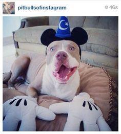 Pittie Mickey...hahaha!!