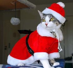 Pets Christmas Costumes in many beautiful designs for Christmas. The best materials and cute designs for cats and dogs Costume Chat, Pet Costumes, I Love Cats, Cute Cats, Funny Cats, Christmas Kitten, Christmas Animals, Funny Christmas, Merry Christmas