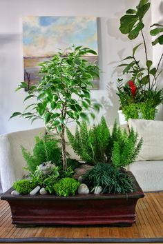 Tabletop fairy miniature garden from Plant by Numbers