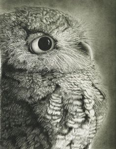 Eastern Screech Owl in graphite. Great Shading, but if the background was as dark as dark could be it would tie the eyes and shadows of the feathers in so that the screech owl pops from the page. A little more time spent shading on this piece and it will draw the eye around the piece. Awesome and Great detail.