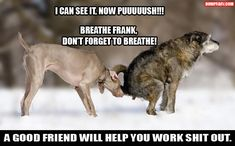 Attack Of The Funny Animals - 60 Pics