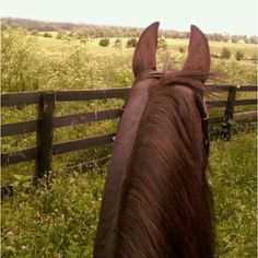The best view in the world: Kentucky hills from the back of a horse.