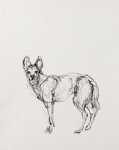 """Coyote""  Artist: Susan Siegel  Sumi Ink on Paper  10.75"" x 15.5""  2012"