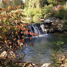 #beautifulday #sunday #sunnyday #iphonephotography #naturelovers #photooftheday #beautiful #trees #waterfall #torontobotanicalgarden #toronto #ontario Iphone Photography, Botanical Gardens, Beautiful Day, Sunny Days, Ontario, Toronto, Waterfall, Sunday, Trees