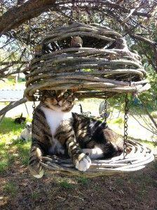 photo avec un chat trop mignon 135 sur http://ift.tt/1oohFRS