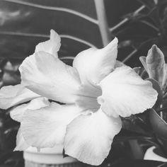 #flowers #flower #petal #petals #nature #beautiful #love #pretty #plants #blossom #sopretty #spring #summer #flowerstagram #flowersofinstagram #flowerstyles_gf #flowerslovers #flowerporn #botanical #floral #florals #insta_pick_blossom #flowermagic #instablooms #bloom #blooms #botanical #floweroftheday http://gelinshop.com/ipost/1524342760768010355/?code=BUnjaojg_hz