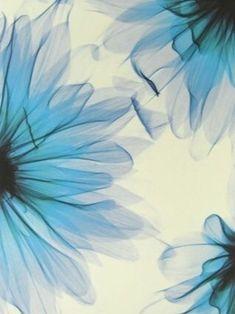 Xray Flower, Flower Art, Art Flowers, Art Google, Oeuvre D'art, Les Oeuvres, Photo Art, Artsy, Sketches