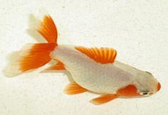 POSTER VISIT THE AQUARIUM IN MONTEREY CA GOLDFISH FISH VINTAGE REPRO FREE S//H