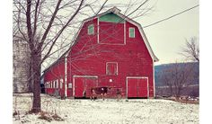 Barn Photograph, Farm Photo, Fine Art Photography, Vermont, Cows, Winter, Snow, Red, White, Brown, Green, Rustic Wall Decor on Etsy, $18.00