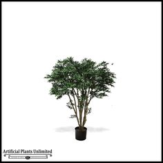 Potted Black Willow Tree (2 Sizes) $180.85