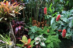 Image from http://qldorganics.com.au/wp-content/uploads/2013/08/Dennis-Garden1.jpg.