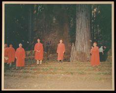 bohemian grove Le Vatican, Walt Disney, Bohemian Grove, Pagan Symbols, Religion, Hotel California, End Of Days, Freemason, Political Views