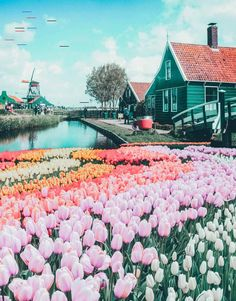 Top things to do in the Netherlands! See the canals of Amsterdam, fields of tulips, Anne Frank Museum, Cube Homes of Rotterdam, and Zaandam Netherlands. adventure travel Top Things to do in the Netherlands Anne Frank, Rotterdam, Destination Voyage, European Destination, Travel Aesthetic, Travel Goals, Travel Tips, Travel Hacks, Quick Travel