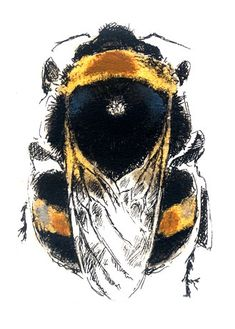 """Louise Bird is simply one of the best """"bee"""" artists I've ever seen..."""