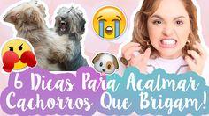 Como Resolver Briga de Cães/Pets? 6 Dicas P/ Acalmar Cachorro Nervoso e ...