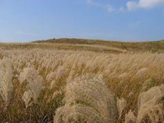 黄金色の草原へ・・・「曽爾高原」 | 奈良県 | Travel.jp【たびねす】