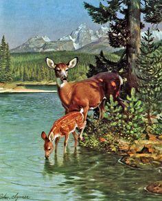 """John Clymer Art Deer Doe w/ Fawn by River Vintage Print """"Call of Wild"""" A+ Deer Photos, Deer Pictures, Anatomy Sculpture, Deer Art, Vintage Art Prints, Fox Art, Wildlife Art, Animal Paintings, Pet Birds"""