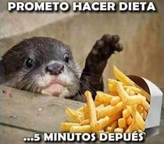 Meme Dieta, Memes, Funny Puppies, Animals, Humor, Food, Cheer, Animaux, Meme