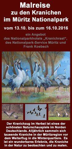 Malreise zu den Kranichen im Müritz Nationalpark