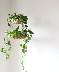 DIY: Hanging Planter – Alana Jones-Mann