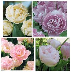 "Cheaper peony ""replacement"" flowers for your wedding (and garden too!)"