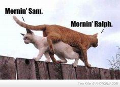 Crazy Kitties..