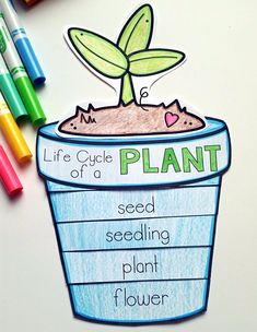 Plants Unit Plan for PLANTS Life Cycle craft. Part of a Full PLANTS Unit Plan for Science, Math & Literacy cross-curricular, hands-on unit. 1st Grade Science, Elementary Science, Science Classroom, Teaching Plants, Life Cycle Craft, Math Literacy, Literacy Centers, Plant Science, E Mc2