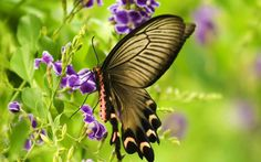 The Butterfly Garden This garden will attract butterflies. Plants in the suggested list nourish the butterflies. Butterfly Kisses, Butterfly Flowers, Butterfly Wings, Butterfly Feeder, Butterfly Species, Flower Colors, Flower Petals, Purple Flowers, Butterfly Pictures