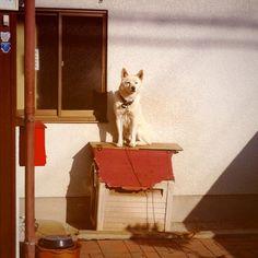 retro dog  #cameran - @kahe0822- #cameranapp