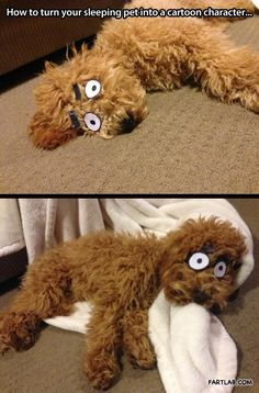 How to turn your sleeping pet into a cartoon character.  This is so wrong... but I still must try it.