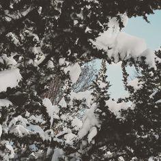 #snow #blizzard2016 #dmv #maryland #gaithersburg #blizzard
