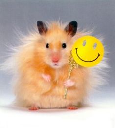 Hamsters on Pinterest | Teddy Bears, Small Animals and Pictures