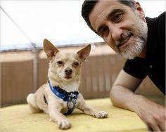 William Berloni, Tony-award winning Animal Trainer, only uses rescue dogs, and humane training methods.  HERO!