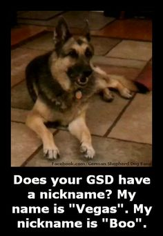 Love German Shepherds? Then check out my Facebook page completely dedicated to them http://www.facebook.com/GermanShepherdDogFans and share pictures of your German Shepherds.
