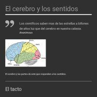 Infographic: El cerebro y lossentidos