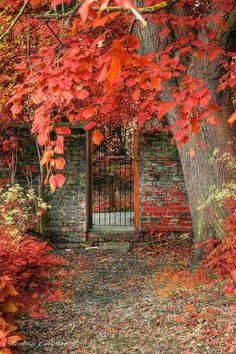 Autumn Photography nature
