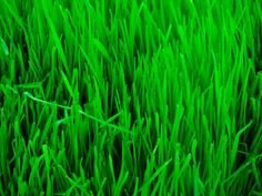 Lawn care products are VERY TOXIC, Please switch to organic products for the safety of everyone. Lawn Care Business Cards, Lawn Maintenance, Tree Care, Natural Living, Herbs, Organic, Modern, West Plains, Health