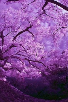 beautiful pinks blue and purple Kamakura Pond with Trees and Clouds ,Japan Purple Love, All Things Purple, Shades Of Purple, Purple Stuff, Periwinkle, Purple Colors, Purple Sky, Kamakura, Beautiful World