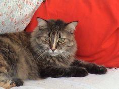 Gordi, hija de Loki y Pumi